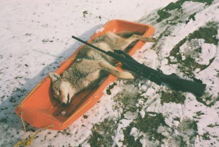 Coyote I took 2-27-17