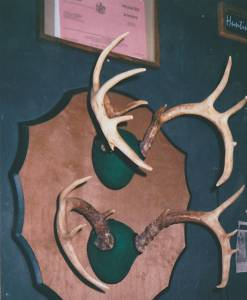Antler and European Skull Mounts