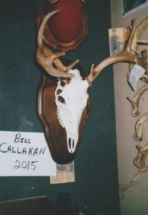 Bill Callahan 2015