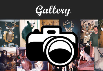 View All the Galleries