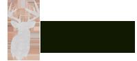 Converse Taxidermy's Company logo