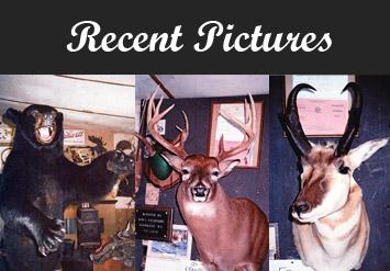 Converse Taxidermy – Save A Buck at Bobs